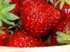 pyo-strawberries-2-jpg