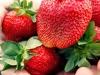 pyo-strawberries-4-jpg