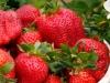 pyo-strawberries-5-jpg