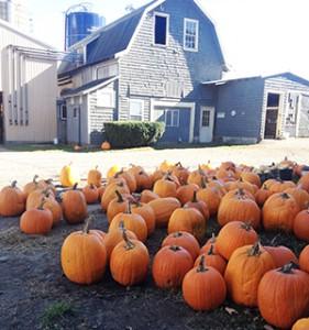 farm.pumpkins.2013.sm
